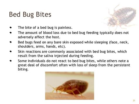 do bed bugs go away bed bugs gpha