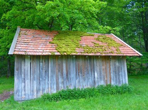 Grass Hut Roof Hut Roof Moss Free Stock Photos In Jpeg Jpg 4000x3000