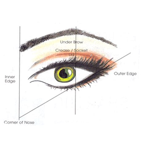 eyeshadow diagram meykuhp flair eye diagrams to help you apply eye makeup