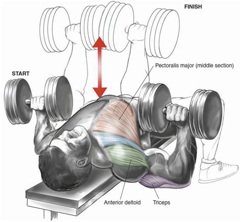 dumbbell bench press exercise chest bo dy com