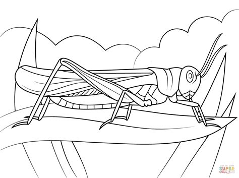 rocky mountain locust coloring page free printable