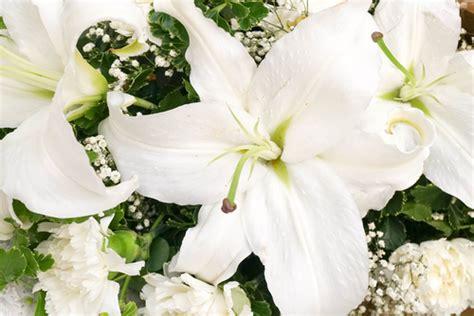 significati dei fiori il significato dei fiori bianchi floraqueen italia