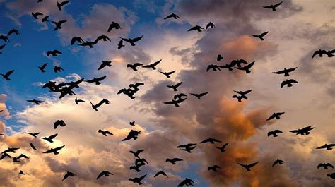 7 fun facts about bird migration
