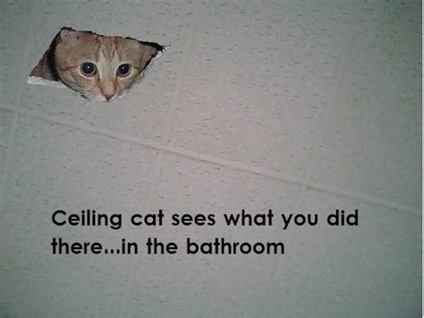 Ceiling Cat Meme - accounting cartoons bing images