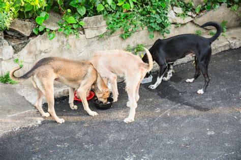 alimentazione animali domestici dieta barf il crudismo per gli animali domestici salute