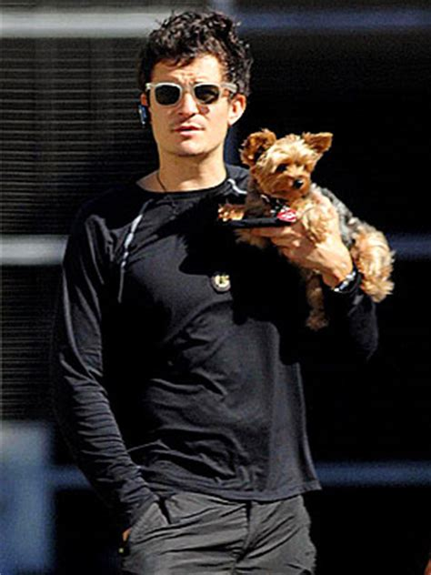 orlando yorkie puppies orlando bloom with his yorkie frankie and their pets