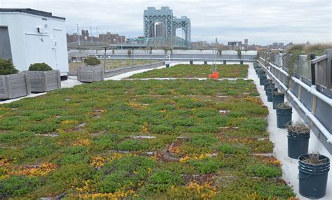 green roof inaccessible new york earth day special the 5 boro green