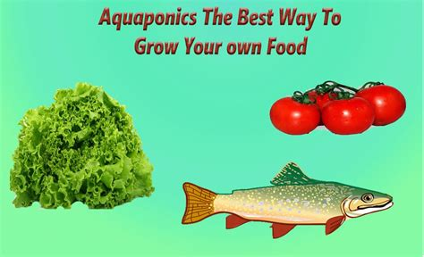 Best Way To Grow In Your Closet by Aquaponics System The Best Way To Grow Food Aquaponics