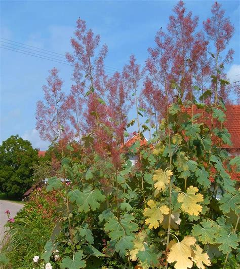 perennial plants to cut back or prune in the fall quiet corner