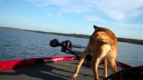 how to make a boat r for dogs dog on deck of bass boat going 72 mph mp4 youtube