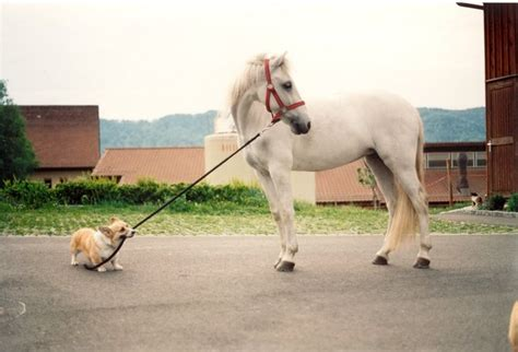 puppies and horses 10 adorable pictures of dogs horses nation