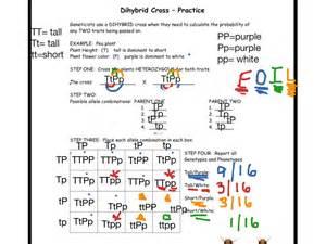 dihybrid cross worksheet defendusinbattleblog