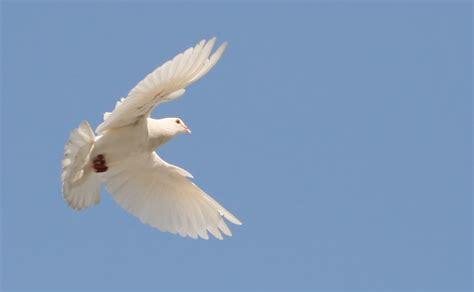 imagenes animales que vuelan el vuelo creacionismo net