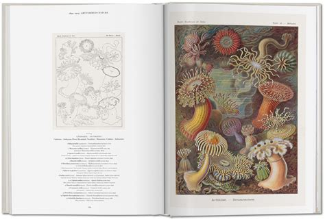 the and science of ernst haeckel multilingual edition books feast your on the of ernst haeckel