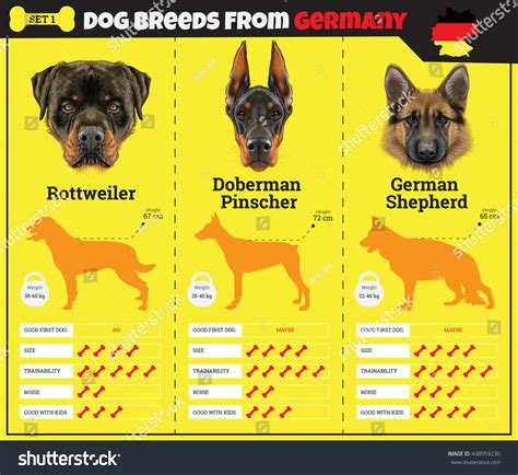 rottweiler types of breeds dogs breed vector info graphics types stock vector 438959230