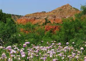 Floor In Spanish palo duro canyon state park nature texas parks