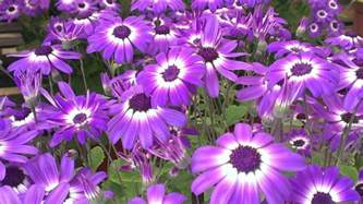 thriving nature in photos planting flowers annuals or perennials