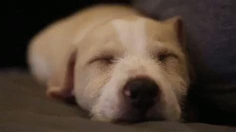 sleepy puppy gif tired gif by badass bk find on giphy