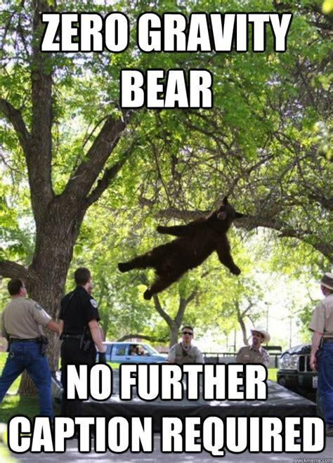 zero gravity bear memes quickmeme