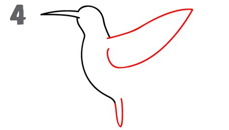 how to draw a hummingbird on a flower hummingbird