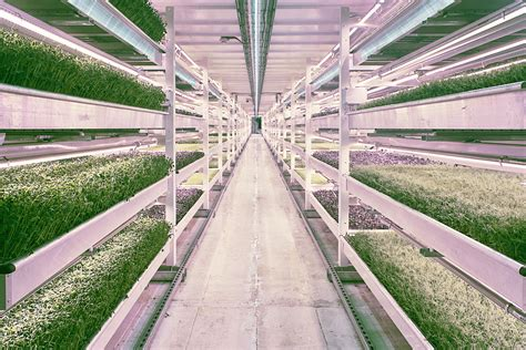 growing a sustainable city the question of agriculture utp insights books association for vertical farming to reveal sustainability