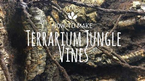 terrarium jungle vines youtube