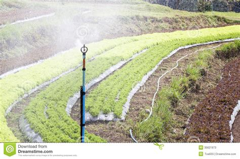 vegetable garden sprinklers vegetable garden sprinkler www imgkid the image