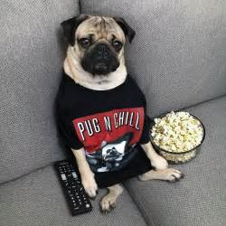 the pugs quot pug n chill tonight quot doug get this doug shirt and more at the merch store www