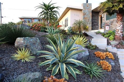 toned succulent hillside contemporary landscape