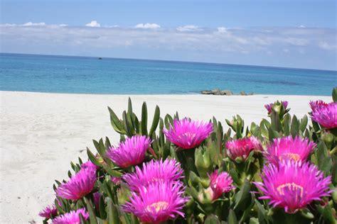 i fiori mare mare archivi tenuta conte ruggero santa domenica di ricadi