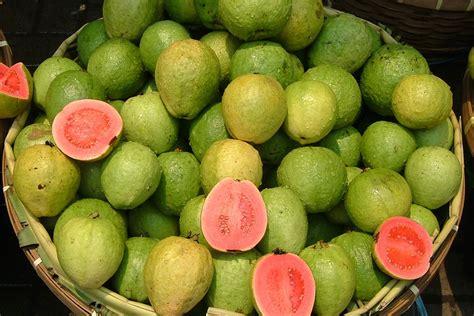 fruit 10 malaysia tropical fruits in malaysia great fruits of malaysia