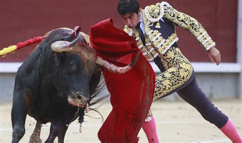why do bulls the color the saturday briefing your questions answered express