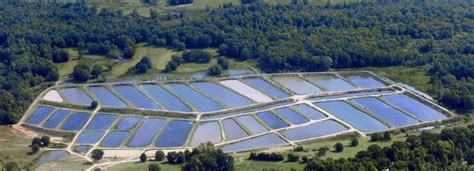catfish hatchery layout own business ideas in bangalore great business ideas of
