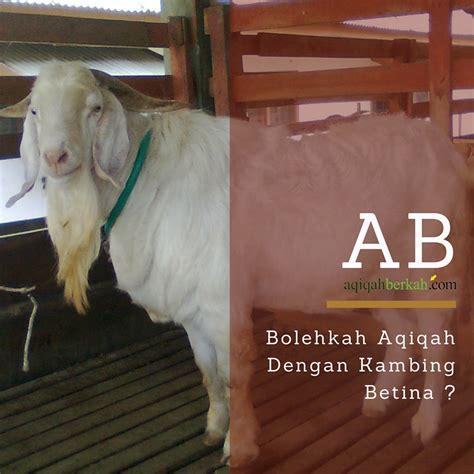 Aqiqah Kambing Jantan 10 bolehkah aqiqah dengan kambing betina