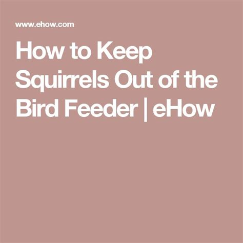 how to keep squirrels out of the bird feeder bird