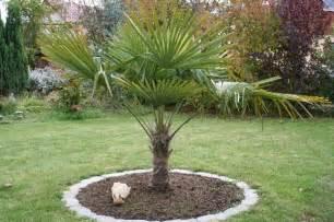 garten palme winteharte exoten palme yucca banane agave u a