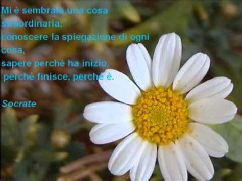 i fiori frasi fiori con frasi