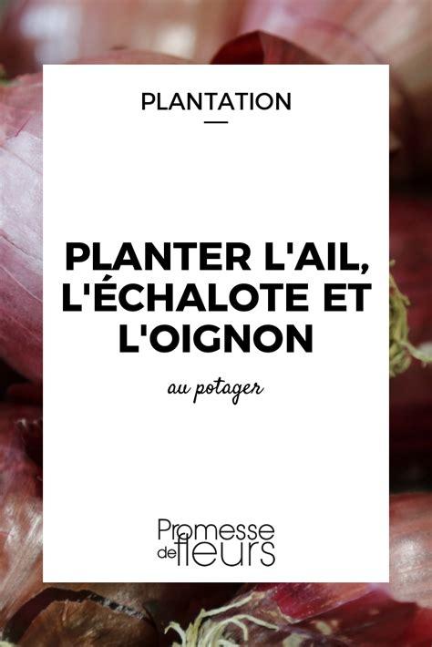 Comment Planter L Oignon by Planter L Ail L 233 Chalote Et L Oignon Jardinage