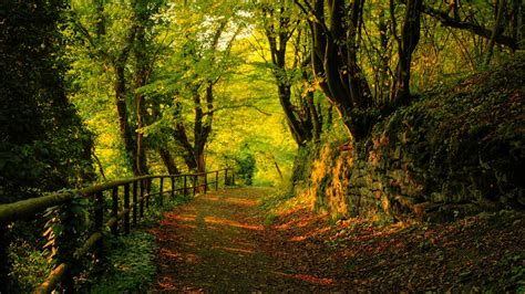 the wood for the trees one s view of nature books path in the woods wallpaper 796213