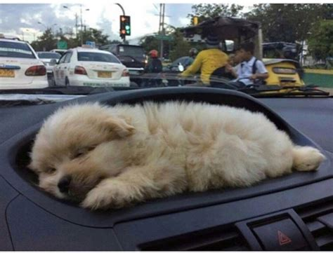 puppy holder new car with puppy holder aww