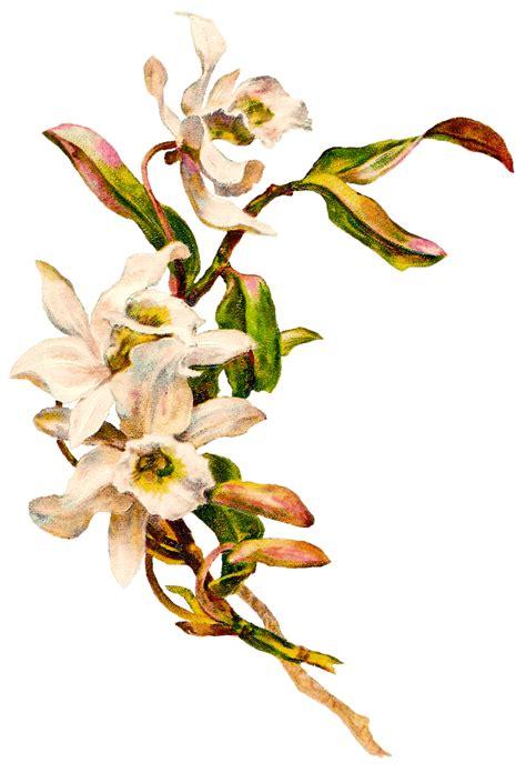 Aksesona Anting Flower Tulip Gold White Transparent vintage flowers transparent png stickpng