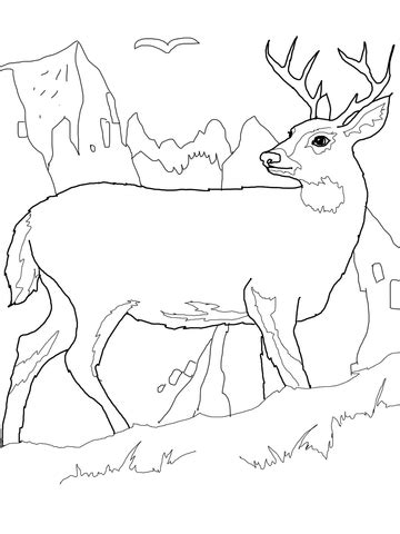 white tail deer coloring page supercoloring com