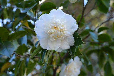 fiori inverno giardino fiorito d inverno ecco i fiori resistono al