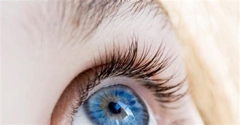 eye color inheritance biol1020 semester 2 2012 eye colour inheritance