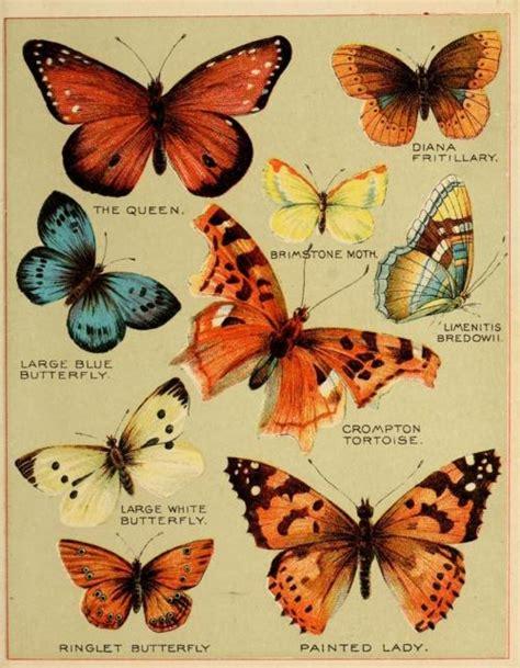 Butterfly Tunik Mo T1310 3 butterflies mo paper mo problems 나비