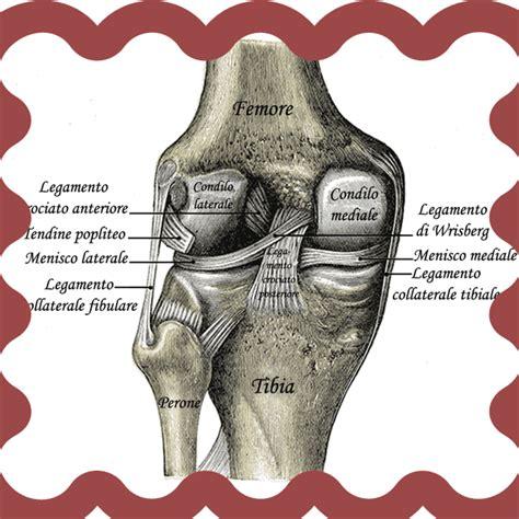 ginocchio dolore interno laterale riabilitazione ginocchio