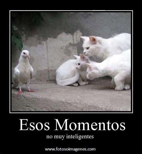 imágenes de inteligentes graciosas desmotivaciones graciosas de gatos momentos no muy