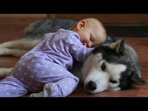 cute dogs and adorable babies compilation youtube cute babies and dogs playing adorable baby dog