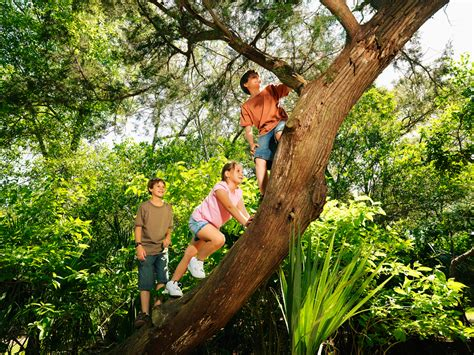 climbing tree climbing a tree can improve cognitive skills researchers say