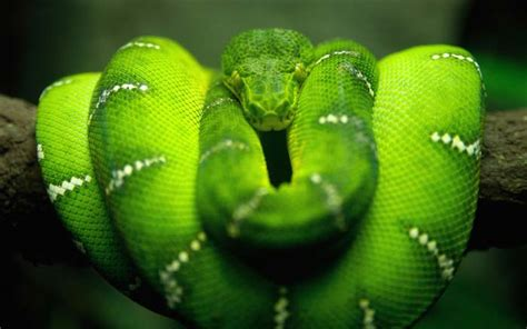 serpent in genesis 3 the worrywart genesis 3 the serpent was right